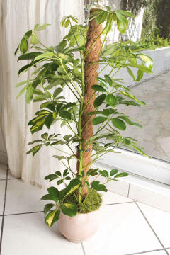 Stake Coconut NORTENE 1mx45mm Support For climbing plants