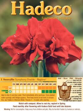 SYMPHONY DOUBLE RAGTIME - 440