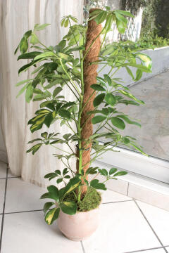 Stake Coconut NORTENE 1.5mx45mm Support For climbing plants