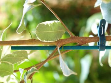 Stake Bamboo Nortene 60Cm Cane Support