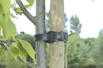 Tie Tree NORTENE 45cm Elastic Strong