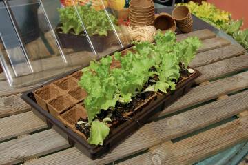 Greenhouse Mini NORTENE 5cmx5cm 28 Pots Biodegradable tray