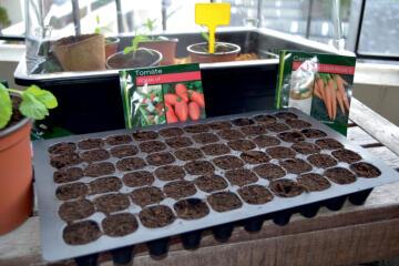Tray Growing NORTENE 36cmx21cmx4cm Set of 3 60 cavaties