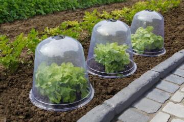 Cover Plastic NORTENE 30cm Bell shape Protects sensitive plants