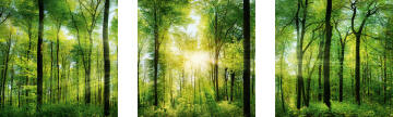 ADHESIVE PICTURE GREEN SUNSHINE 30X30