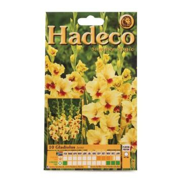 GLADIOLI JESTER - YELLOW/RED HEART - 382