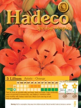 LILIUM ASIATIC - ORANGE