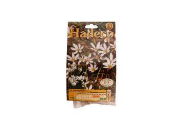ZEPHYRANTHES WHITE - 4156