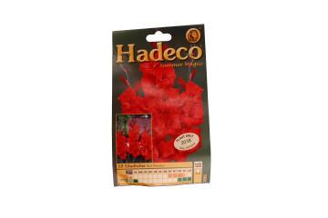 GLADIOLI RED MATADOR - RED - 380